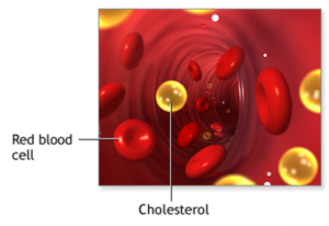 cholesterol moving in the blood flow