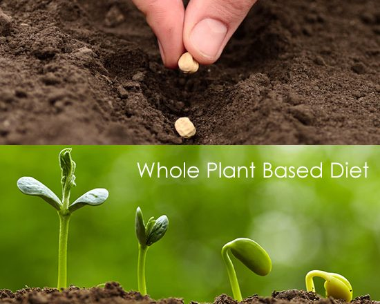 whole plant based diet