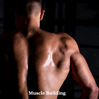 best muscle building foods